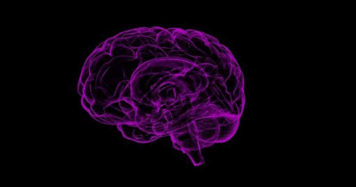 depiction of human brain