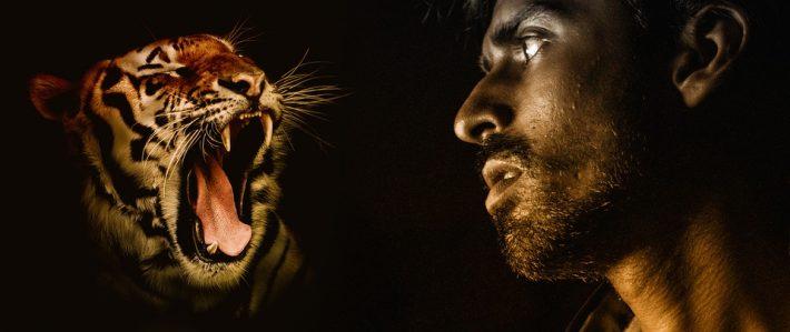 man looking at tiger